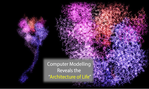 Computer Model Describes the 'Architecture of Life'
